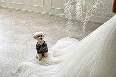 グランピングフォトウェディング&ドッグキャビンステイプランの撮影イメージ Girls Dresses, Flower Girl Dresses, Glamping, Wedding Dresses, Flowers, Dresses Of Girls, Bride Dresses, Bridal Gowns, Go Glamping
