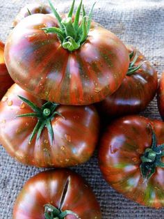 Tips for Growing an abundance of heirloom tomatoes.