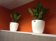 ExecuFlora - Office Plants Are For Life! Improve Productivity, Office Plants, Indoor Plants, Planter Pots, Life, Inspiration, Inside Plants, Biblical Inspiration, Indoor House Plants