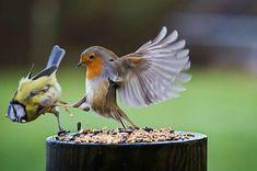 Afblijven, t's mijn eten!!