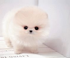 aww its like a little ball of fur filled with cuteness