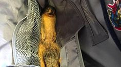 Kid has the perfect response when asked why he brought a dead squirrel to school