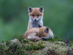 Watching over you by Oona Torgersen