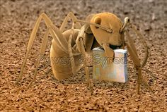 Ant (Formica fusca) holding a microchip