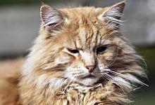 Eh bien oui, les chats, les chiens, et tous les animaux à poils ont le même problème. Voici 10 trucs imparables pour vous débarrasser des poils de Félix (et de Médor, ou de Capucine...)  Découvrez l'astuce ici : http://www.comment-economiser.fr/enlever-poils-chats-maison.html