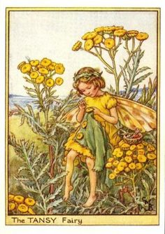 Tansy Flower Fairy Print c.1950 Fairies by Cicely Mary Barker