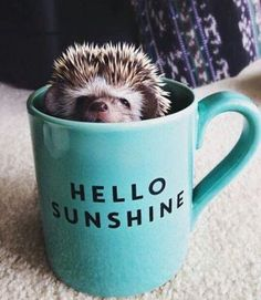Hello sunshine! Mikor írhatjuk már végre ezt?!?! #hellosunshine #goodmorning #morning #coffee #work #winter #cold #wintertime #hedgehog  via MARIE CLAIRE HUNGARY MAGAZINE OFFICIAL INSTAGRAM - Celebrity  Fashion  Haute Couture  Advertising  Culture  Beauty  Editorial Photography  Magazine Covers  Supermodels  Runway Models