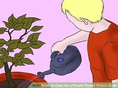 Image titled Care for a Purple Flower Potato Bush Step 7