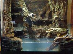 TheHydra.net • View topic - 56g Crab Loving Paludarium