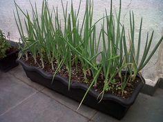 Como preparar seu vaso para cultivar sua horta em casa ou apartamento