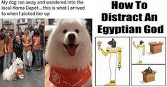 Dog Runs, Dog Memes, Animal Memes, Wander, Egyptian, Dogs, Animals, Animales, Animaux