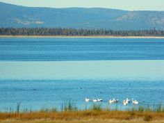 Those who live in small town enjoy more nature and less people. Birdwatchers, wildlife photographers and fishing. No big crowds at this huge lake, north of Susanville, CA Forest Map, Forest Mountain, Pine Forest, Small Towns In California, Eagle Lake, Seaside Towns, Snow Skiing, Rv Parks