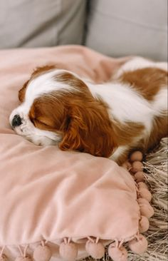 Cute Baby Dogs, Cute Dogs And Puppies, Cute Baby Animals, Doggies, King Charles Puppy, Cavalier King Charles Dog, Cavalier King Spaniel, Spaniel Puppies, Babies