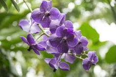Image result for flowering plants