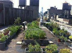 . rooftop garden .