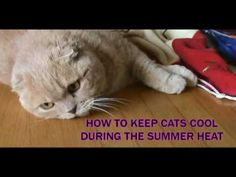 HOW TO KEEP CATS COOL DURING THE SUMMER HEAT: hot weather pet care tips, prevent cat heatstroke - YouTube