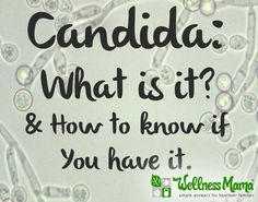 Candida what is it and how to know if you have it What is Candida? (and How to Tell if You Have It)