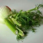 """""""Sommergemüse - das wird regional geerntet"""" #harvest #ernte #saisonal #regional #sustainable #fruits #vegetables #gemüse #sustainablility #nachhaltigkeit #fenchel #fennel"""