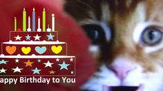 Happy Birthday Song singing Cat | Funny Song for Kids and Children