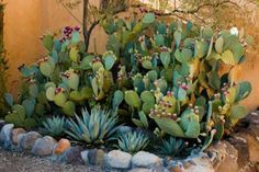 Plant a sneeze-free garden
