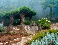 """Old Garden,"" photo by Paulo FLOP from '500px is Photography'"
