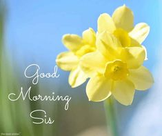 Looking for Good Morning Wishes for Sister? Start your day by sending these beautiful Images, Pictures, Quotes, Messages and Greetings to your Sis with Love. Good Morning Sister Images, Good Morning Gif, Morning Pictures, Good Morning Wishes, Good Morning Quotes, Prayers For Sister, Wishes For Sister, Weekday Quotes, Angel Pictures