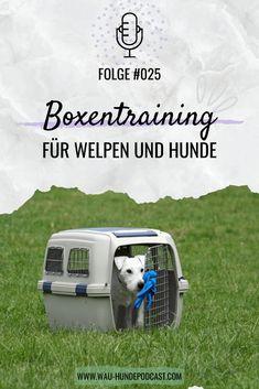 Boxentraining Hunde Anleitung für dich und deinen Hund im Podcast. #box #hundebox #hund #hundetraining #hundetrainer #hundetrainerin #anleitung Positive Verstärkung, Dogs, Pooch Workout, Puppys, Parenting, Tutorials, Pet Dogs, Doggies