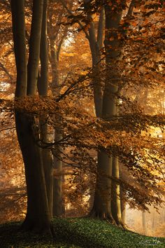 ~~Autumn's Kiss | forest, the Netherlands | by Martin Podt~~
