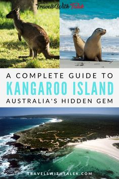 Don't miss out on Kangaroo Island, Australia. It really is a hidden gem full of wildlife and stunning scenery in national parks. Here is our complete travel guide to Kangaroo Island such as how to get there, things to do on Kangaroo Island, and more. #australia #oceania #wildlife #travelguide #travel
