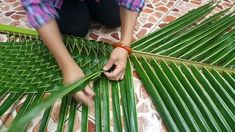 1 million+ Stunning Free Images to Use Anywhere Flax Weaving, Weaving Art, Basket Weaving, Leaf Crafts, Diy Home Crafts, Diy Arts And Crafts, Tree Crafts, Coconut Leaves, Flower Arrangements Simple