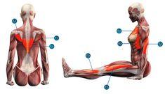 9. Дандасана Показания: Искривления позвоночника, хроническая усталость и напряжение в ногах, судороги.