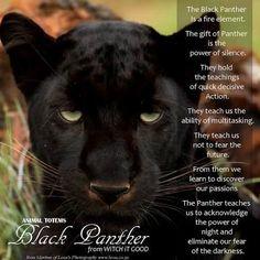 black panther animal totem - Google Search