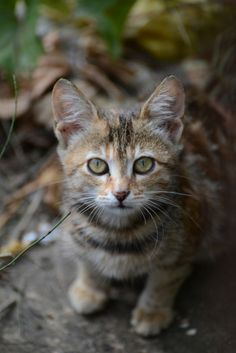 Stray cat by Andrey