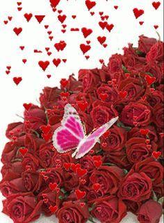 GIFS Animados   Rosas de Color Rojo - 1000 Gifs