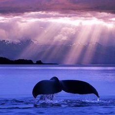 Sun rays and whale tail. #photography