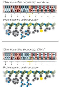 Genetic Linkage to Color Amino Acid Sequence, Pigeon Breeds, Racing Pigeons, Amino Acids, Genetics, Birds, Color, Colour, Bird