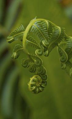 Growing Leaves, Kuraburi Thailand by Troup Dresser