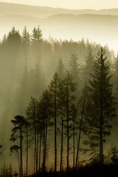 The Most Effective Time to Visit the Redwood Forest Foggy Forest, Misty Forest, Redwood Forest, Forest Landscape, Landscape Design, Landscape Photos, Forest Tattoos, Merian, Evergreen Trees