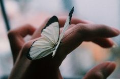 butterfly and indie image