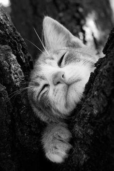 llbwwb: Todays Cuteness :) (via 500px / Cat sleeping by Nacho...