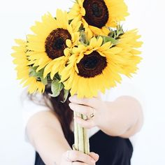 #Sunflowers Freelance Makeup Artist, Make Blog, Sunflowers, House Plants, Yellow, Indoor House Plants, Foliage Plants, Houseplants, Apartment Plants