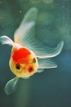 +fish