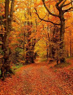 Orange Autumn, Leskowiec, Beskid Mały, Poland