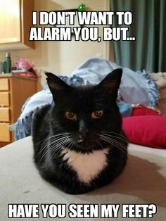 26 Best Cat Memes Created By Me Images Cats Cat Memes Animals