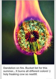 Amazingly Cool Photography Idea