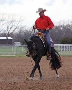 Horse Training: Teach and master the sidepass