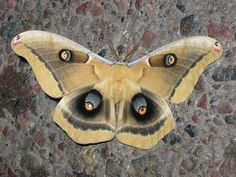 Moth by 89AKurt, via Flickr
