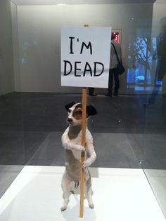 Not mine but I wish I owned it.   David Shrigley at YBCA
