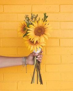 Ideas For Aesthetic Wallpaper Pastel Yellow Flower Background Wallpaper, Sunflower Wallpaper, Flower Backgrounds, Pastel Background, Pastel Wallpaper, Wallpaper Wallpapers, Summer Backgrounds, Yellow Aesthetic Pastel, Aesthetic Colors