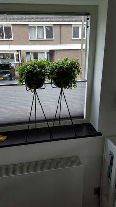Plant binnen